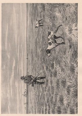 "ORIG B&W SPORTING PRINT/ ""SNIPE-SHOOTING - A TIGHT CARTRIDGE""illustrator- A.B.  Frost - Product Image"