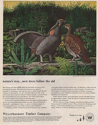 ORIG VINTAGE MAGAZINE AD/ 1952 WEYERHAEUSER TIMBER COMPANY ADillustrator- Fred  Ludekens - Product Image