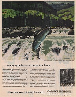 ORIG VINTAGE MAGAZINE AD/ 1953 WEYERHAEUSER TIMBER CO. AD.illustrator- Fred   Ludekens - Product Image